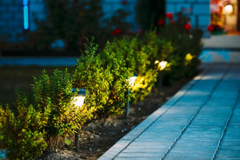 landscape lighting in srubs along a walkway