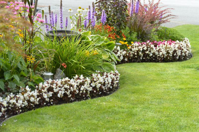 colorful flowers in a flower bed next to green grass