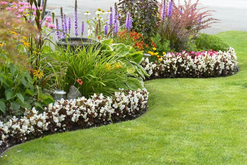 landscape plants with proper water drainage