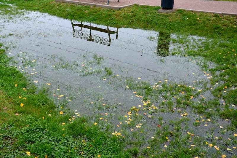 soggy yard with poor water drainage